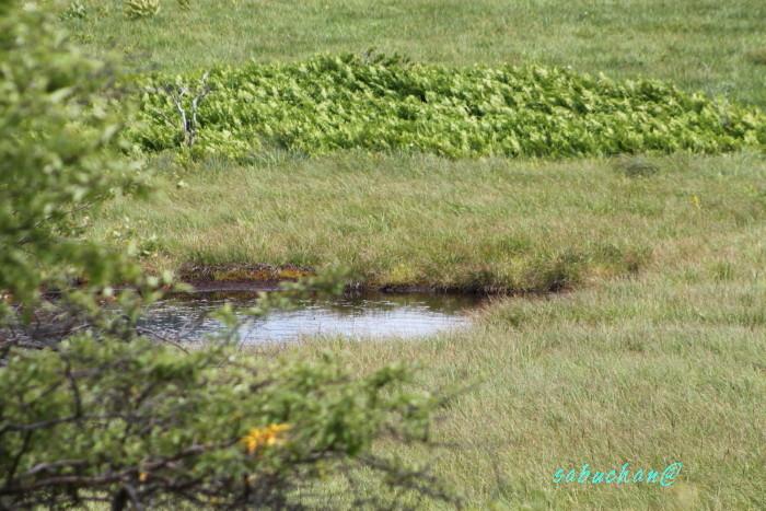 八島湿原 (103).JPG