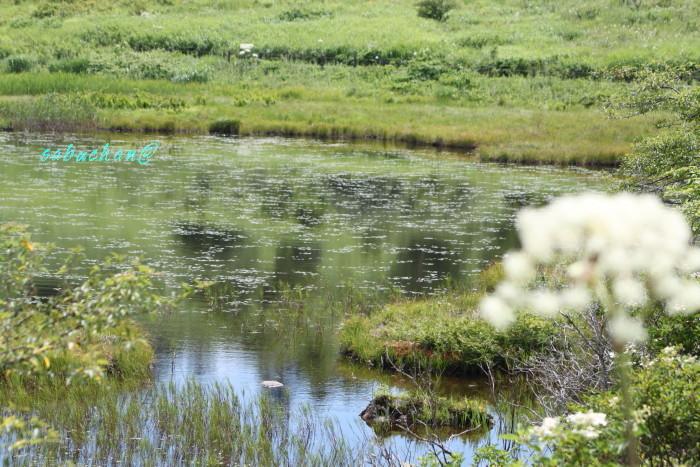 八島湿原 (117).JPG