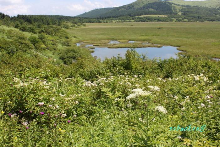 八島湿原 (7).JPG