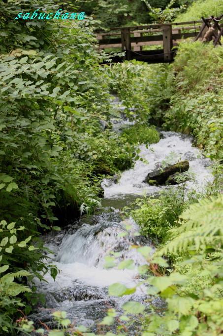 白糸の滝2 (2).JPG