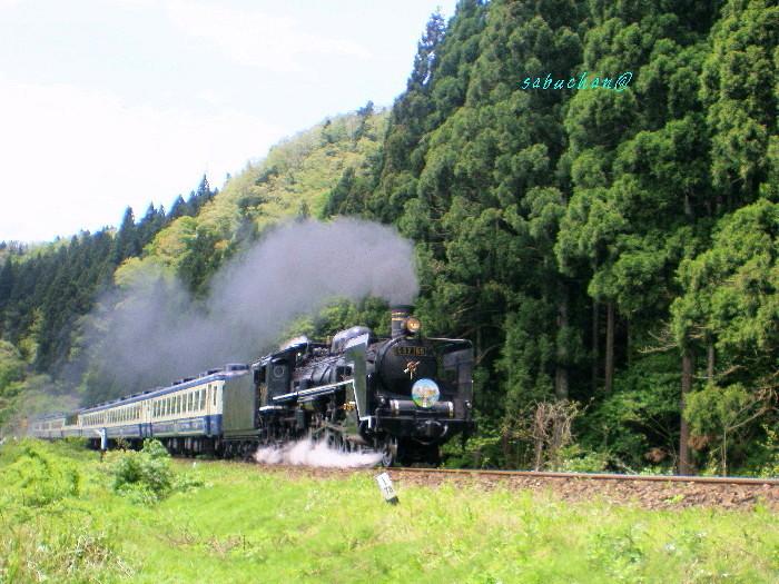 SL D57貴婦人 (2).jpg